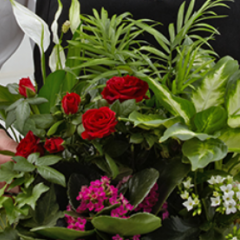 DiBella Flowers & Gifts Las Vegas - Can't decide on which plant to send? Let the florist design something special using their most beautiful blooming and green plants in a basket. The combination will make a lovely presentation, appropriate for any occasion!
