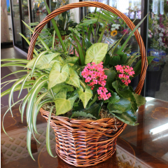 DiBella Flowers & Gifts Las Vegas - Basket Garden with Bloomer *Large shown* Colors and plants may vary * Basket may vary