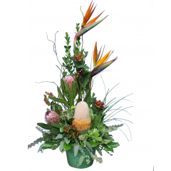 DiBella Flowers & Gifts Las Vegas - Green Tropics Birds of Paradise, and Proteas in keepsake ceramic.