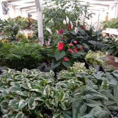 DiBella Flowers & Gifts Las Vegas - Greenhouse Plants Greenhouse on premises houses huge selection of green and blooming plants. Call for availability (702)384-1121
