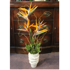 DiBella Flowers & Gifts Las Vegas - Birds of Paradise in an art deco ceramic keepsake. Simple and elegant!