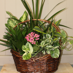 DiBella Flowers & Gifts Las Vegas - Basket Garden - Grand  Perfect for any occasion, this lush mixed basket of green and blooming plants is a beautiful way to express your sentiment. ** plant types may vary