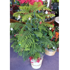 DiBella Flowers & Gifts Las Vegas - Decoration and lights included. Limited Quantity! Approx 4 ft tall
