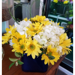 DiBella Flowers & Gifts Las Vegas - Bright yellow daisies and white hydrangea in a cobalt blue cube. Bear grass heart added.