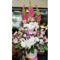 DiBella Flowers & Gifts Las Vegas - Shades of pink in keepsake fish themed container. So cute! **Types of flowers may vary**