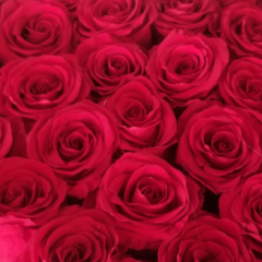DiBella Flowers & Gifts Las Vegas - Our Forever roses in circular hat box in two sizes