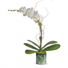 DiBella Flowers & Gifts Las Vegas - Gorgeous Phaleonopsis Orchid in stunning opal vase.