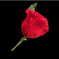 DiBella Flowers & Gifts Las Vegas - Forever Rose Boutonniere These are preserved roses that last a year or longer. Our special process preserves REAL roses to last...just like your love! * Red only