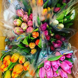 DiBella Flowers & Gifts Las Vegas - Beautiful fresh tulips on a vase! Please be sure and pick your color. We will do our best keep the that color. If no color is chosen we will pick the prettiest.  * Please call with any questions