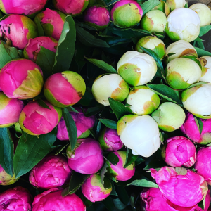 DiBella Flowers & Gifts Las Vegas - Peonies are one of our favorite flowers this season and they are available in limited quantities. Get them while they last!
