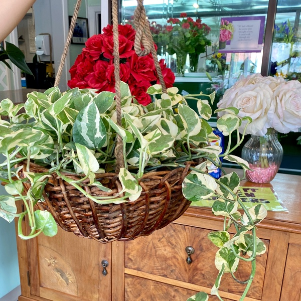 DiBella Flowers & Gifts Las Vegas - Hardy and beautiful hanging pothos garden.