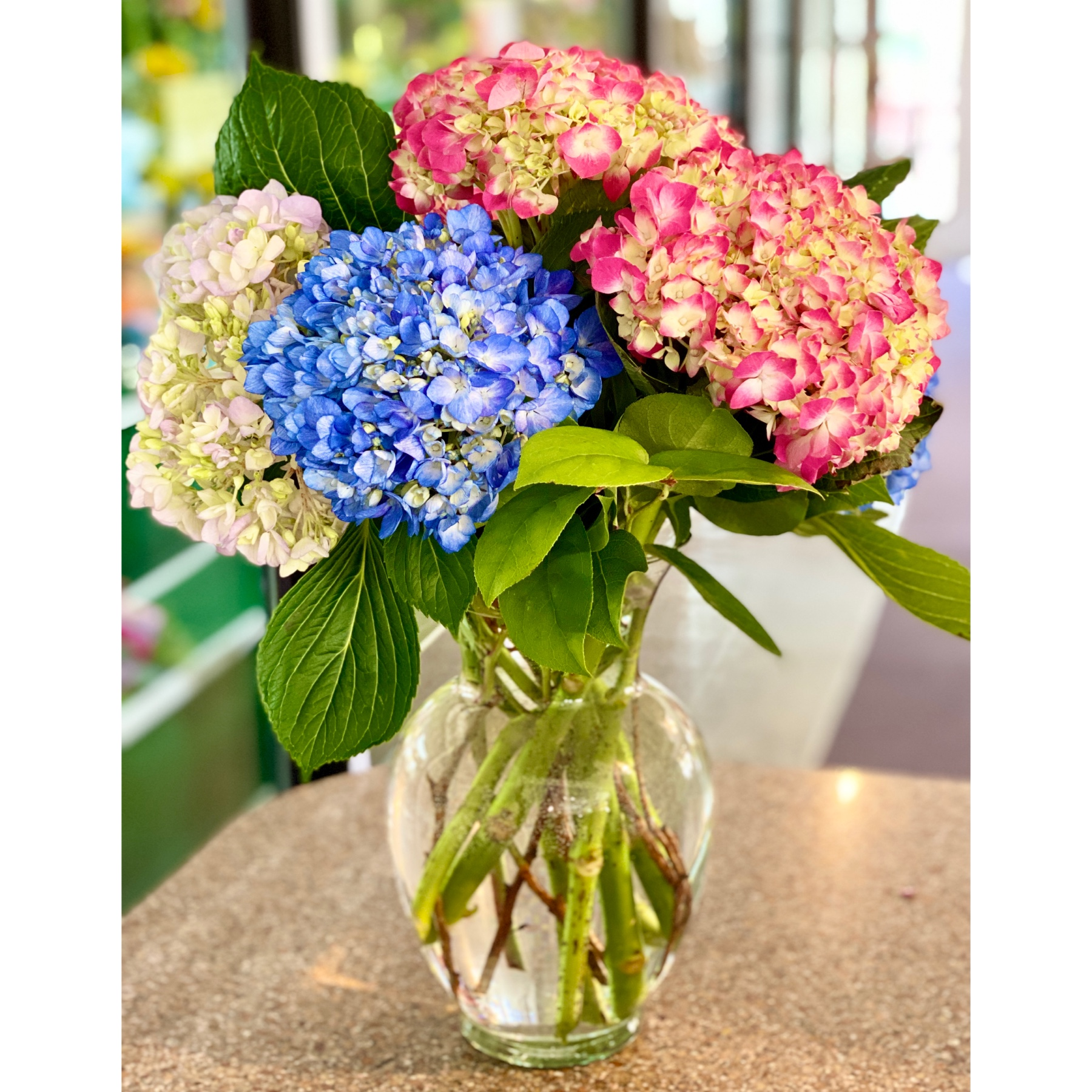 DiBella Flowers & Gifts Las Vegas - Fresh assorted hydrangea in clear vase. Simply beautiful! *shades of hydrangea may vary