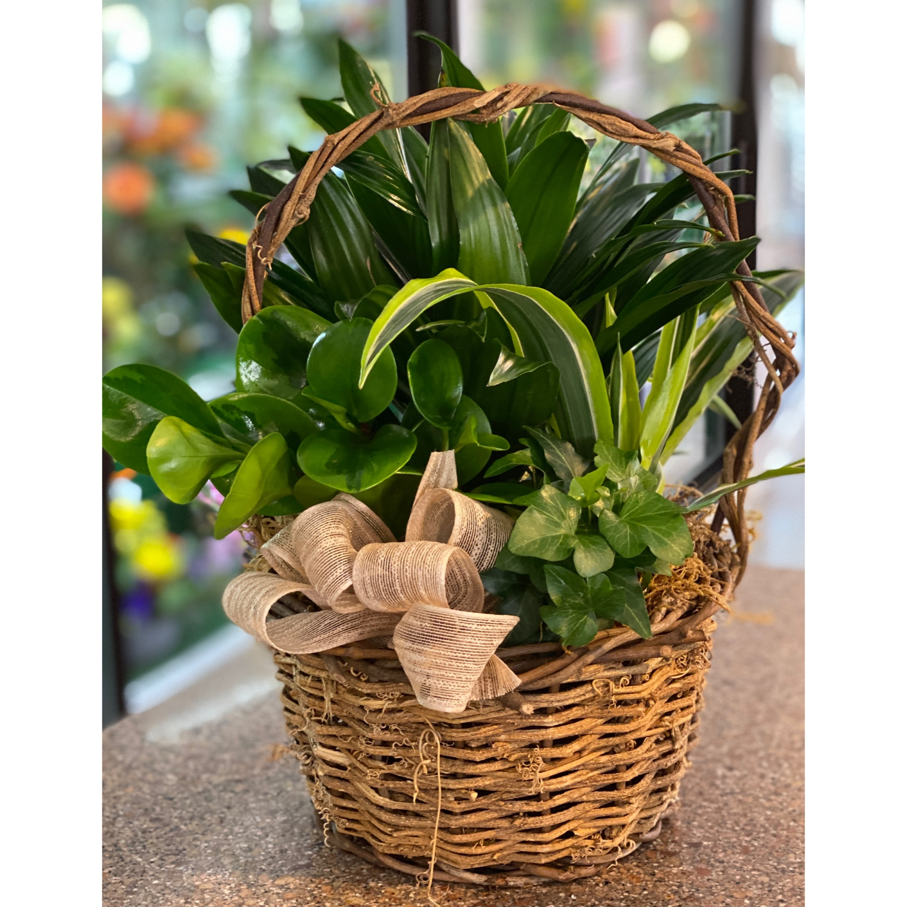DiBella Flowers & Gifts Las Vegas - Our medium sized basket full of fresh, hardy, Vegas friendly green plants. Perfect for a desktop or counter.