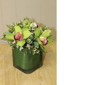 DiBella Flowers & Gifts Las Vegas - Cymbidium Orchid Arranged in a Cube