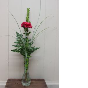 DiBella Flowers & Gifts Las Vegas - Single Carnation Budvase * if no color is chosen, nicest available will be picked