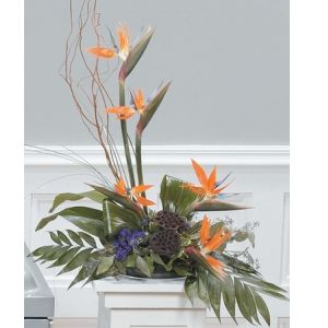 DiBella Flowers & Gifts Las Vegas - Tropical Pedestal Arrangement CTT89-11 Birds of Paradise in a High Style Design.