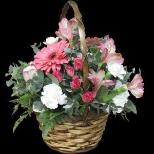 DiBella Flowers & Gifts Las Vegas - Sweet Romance Send this sweet basket full of fresh Gerbera Daisies, Alstromeria lilies, Spray roses and more!