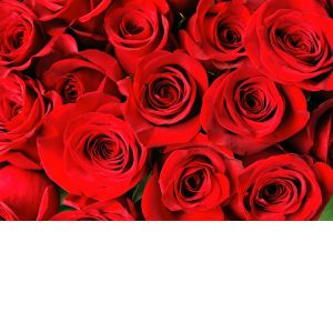 DiBella Flowers & Gifts Las Vegas - Add more Roses to your arrangement! Please specify color or red will be used. *Pricing only good towards a dozen or more roses or mixed arrangements
