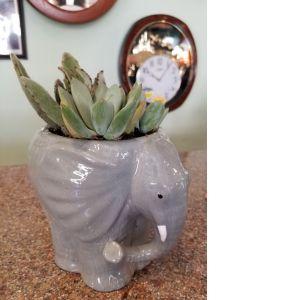 DiBella Flowers & Gifts Las Vegas - Elephant Succulent Planter
