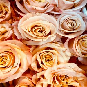 DiBella Flowers & Gifts Las Vegas - Our gorgeous shimmer roses. Pale peach and beautiful. Conveys modesty, genuineness, sincerity and gratitude.