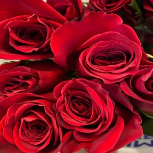 DiBella Flowers & Gifts Las Vegas - Our perfect red roses. Symbolizing love, romance and admiration.