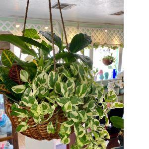 DiBella Flowers & Gifts Las Vegas - Gorgeous hanging basket full of hardy indoor plants.
