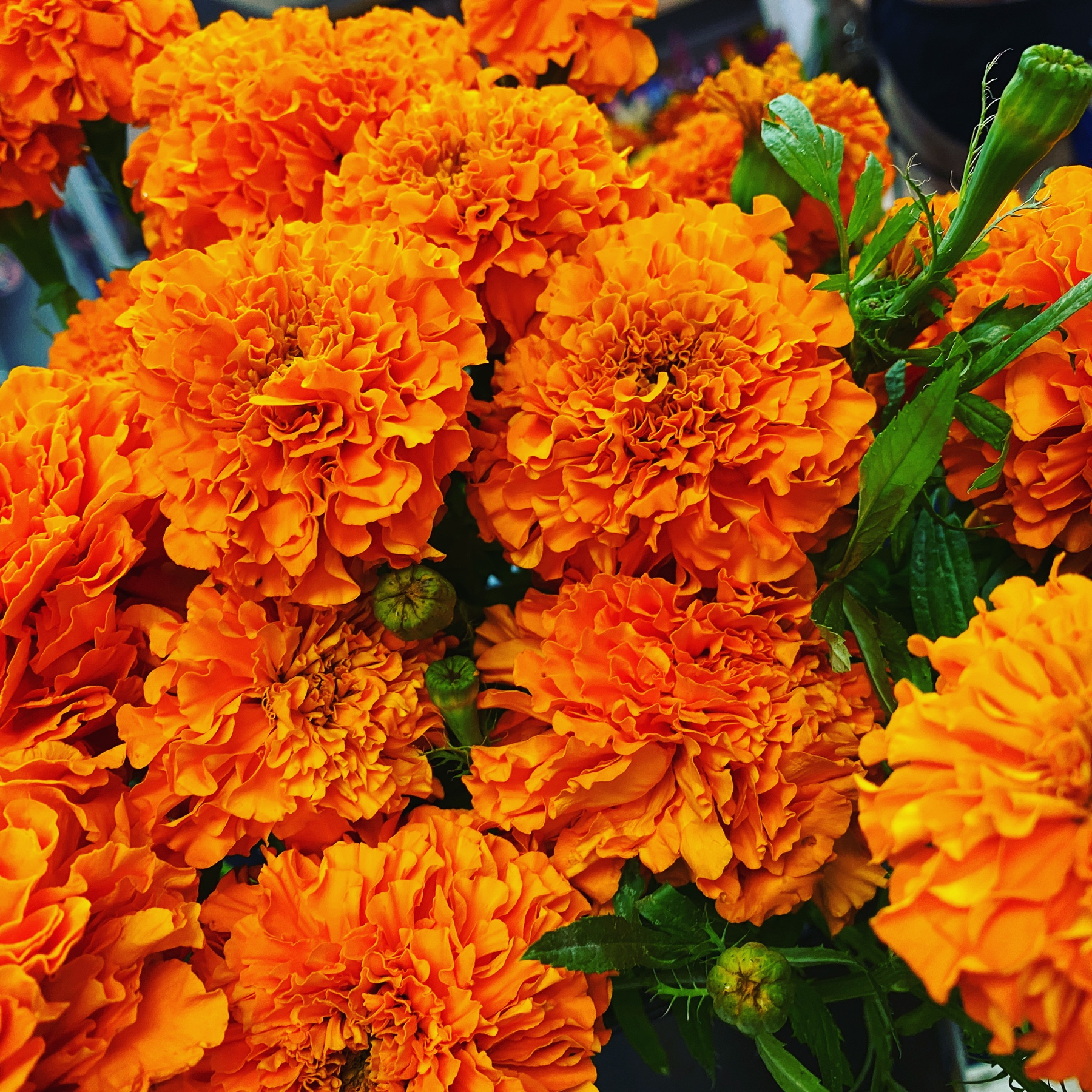 DiBella Flowers & Gifts Las Vegas - Fall has officially arrived with fresh marigolds.