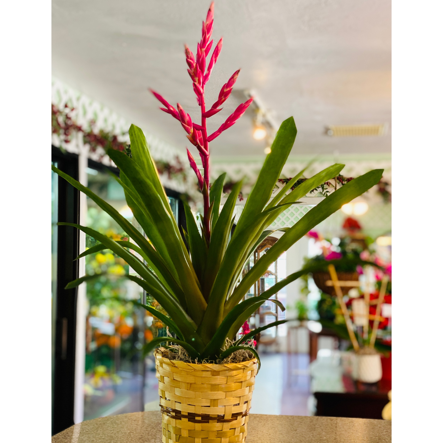 DiBella Flowers & Gifts Las Vegas - These rare beauties are a hardy and beautiful addition to the bromeliad family.