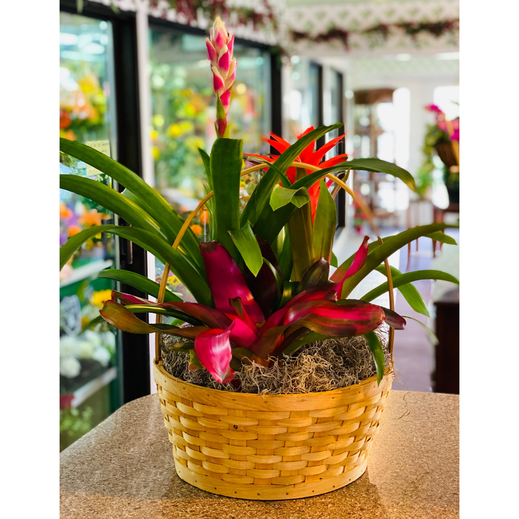 DiBella Flowers & Gifts Las Vegas - A hardy beautiful mix of bromeliad plants.
