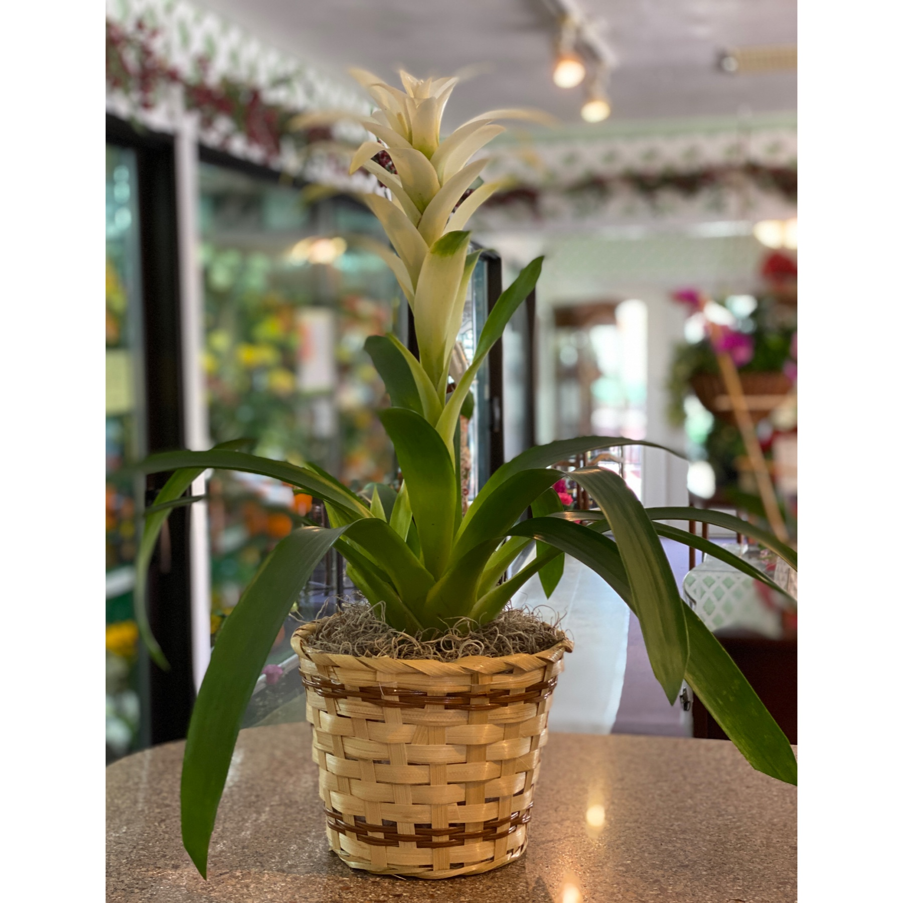 DiBella Flowers & Gifts Las Vegas - This unique beauty would be a nice addition to any venue.