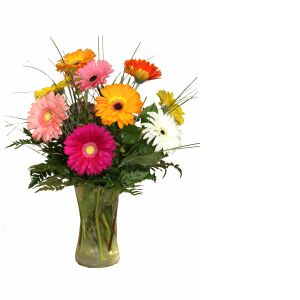 DiBella Flowers & Gifts Las Vegas - A bright mix of Gerbera Daisies in a vase. This sunny mix is sure to brighten up anyone's day!  *Gerbera Colors may vary
