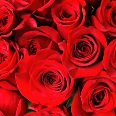 Freedom Roses Addon