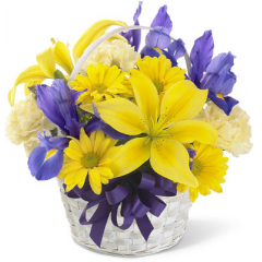 Capture the Spirit of Spring with this traditional bouquet. A handled bamboo basket holds bold purple iris and statice that defer to lemon yellow Asiatic lilies, soft yellow carnations and bright yellow daisy poms. It's the perfect petite basket to celebrate any occasion.<br>