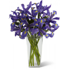 The FTD Iris Riches Bouquet is a true treasure of springtime charm and grace. Deep midnight blue iris create a simple, yet gorgeous, bouquet accented with lush greens and arranged in a clear glass square tower vase to bring the amazing color and intriguing blooms of these Spring favorites to your special recipient.  <br>