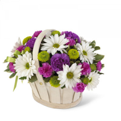 This pretty basket is sure to cheer up anyone's day. This white-wash handled basket is filled with green button pompons, white daisy pompons, hot pink mini carnations and purple carnations. A lavender ribbon bow completes your best wishes.<br>