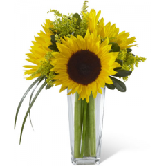 """The FTD Sunshine Daydream Bouquet highlights stunning sunflowers to capture their every attention with its bright beauty. Gorgeous sunflowers are accented with solidago, lily grass blades and lush greens to create a memorable flower bouquet. Presented in a clear glass tapered square vase, this arrangement sends your warmest wishes and highest hopes for the days ahead. GOOD bouquet includes 3 stems. Approx. 14""""H x 10""""W. BETTER bouquet includes 4 stems. Approx. 14""""H x 11""""W. BEST bouquet includes 6 stems. Approx. 16""""H x 13""""W. <br>"""