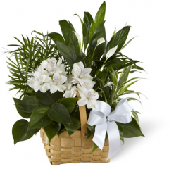 The FTD Peace & Serenity Dishgarden is a gorgeous way to convey your deepest sympathies for your special recipient's loss. A collection of incredibly beautiful plants accented by stems of white Peruvian lilies. The presentation arrives in a natural woodchip rectangular basket accented with a white satin ribbon, to commemorate the life of the deceased and offer comfort and peace with its lush elegance.  <br>