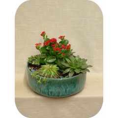 Ceramic garden planter with a 4in. Kalanchoe plant surrounded by four 4in. succulent plants and soil decor.  Container colors may vary.  Drought tolerant!