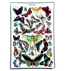"""This beautifully handmade trays with stunning butterflies  are a lovely gift . We are delighted to have them in the shop and they are a beautiful addition to a flower arrangement or a fantastic gift on their own. Let us deliver one or you today. Size 4""""x6"""" inches About the artist: Andy Lowry has been producing decorative home goods under the moniker of Why Girls Go Astray for over a decade. Why Girls Go Astray's decoupage wares are made by hand using imagery from our collection of antique prints. Our goods are designed to not only look spectacular, but also to provide years of service as a serving tray, repository for everyday small items,or reliquary for treasures of import. These are proudly made in Sacrament, part of our Real Local Collection."""