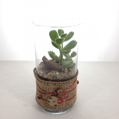 "A succulent plant in a cylinder vase.  Low maintenance plants!  Great for office desks!  Approx. 7.5""H x 3.5""W"