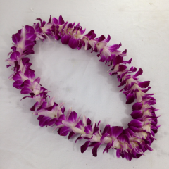 A single strand dendrobium orchid lei.