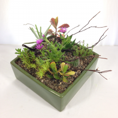 """A wonderful variety of succulent plants in a ceramic dish.  Approx. 12"""" x 12"""""""