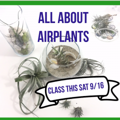 All About Air Plants Class