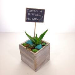A succulent plant in a whitewashed wooden box with colorful accents and a chalkboard stick-in.