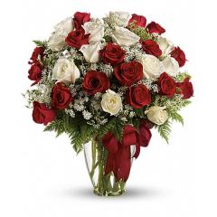 24 Roses - Premium