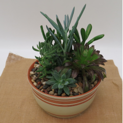 Succulent Garden - Deluxe