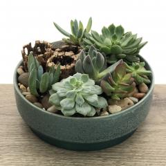 Mixed Succulent Garden in Rosebaum Pot
