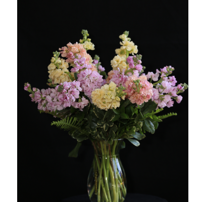 Ninth Street Flowers Durham - A lush spring arrangement of pastel-toned Stock flowers.