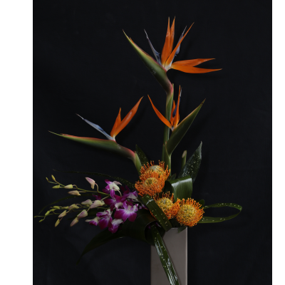 Ninth Street Flowers Durham - A stylized, contemporary arrangement featuring bird of paradise, dendrobium orchids and pin cushion protea