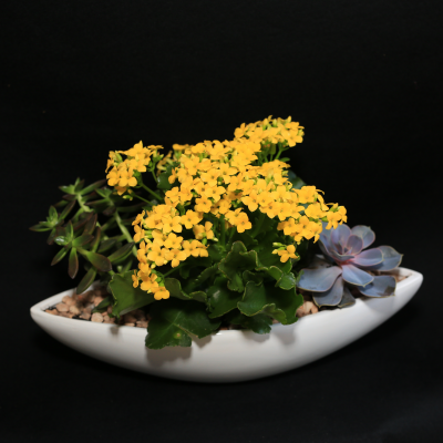 """Ninth Street Flowers Durham - A succulent garden in a decorative """"boat"""" container, featuring a spectacularly blooming kalanchoe plant. Please note: container may vary."""